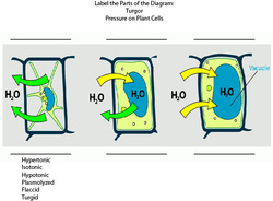 Turgor Pressure on Plant Cells
