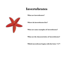 What are Invertebrates?